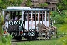 Paket Wisata Bromo Malang Taman Safari 3 Hari 2 Malam