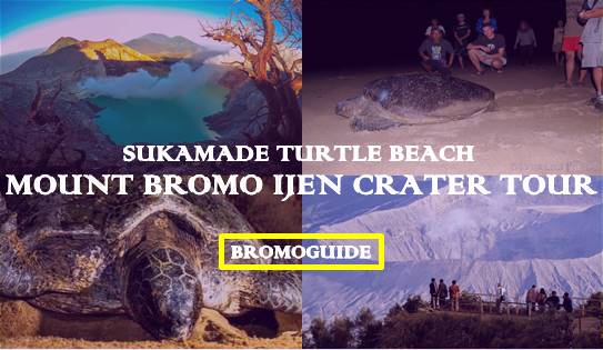 Mount Bromo Ijen Sukamade Beach Tour 4 Days | Mount Bromo Ijen Tour